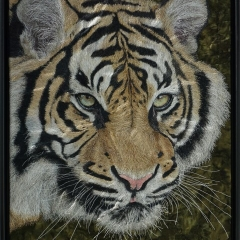 Janine Heschl - Sumatra Tiger