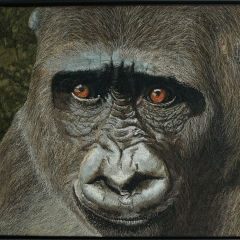 Janine Heschl - Westlicher Flachlandgorilla
